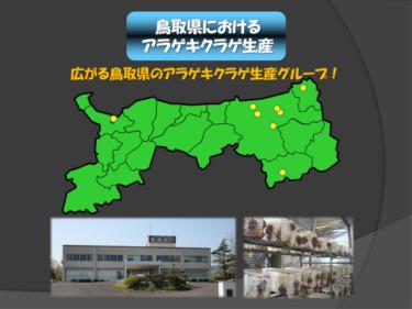 きくらげのおはなし③「激化するアラゲキクラゲ生産!鳥取県は生き残れるのか!?」